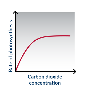 Ngss life sciences construct an explanation about the rate of construct an explanation about the rate of photosynthesis ccuart Choice Image