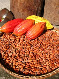 columbian exchange chocolate