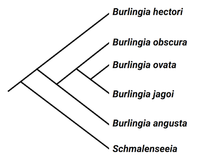 Ngss Life Sciences Analysis Of A Trilobite Cladogram